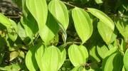 3 plantas para mejorar nuestra salud