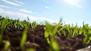 plantas-en-crecimiento