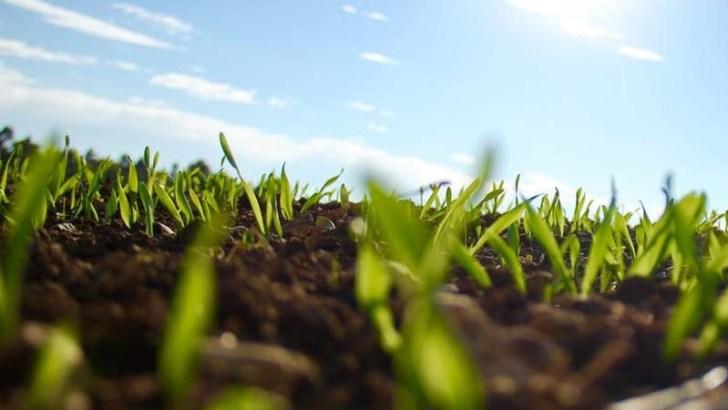 La levadura puede ser útil en suelos contaminados