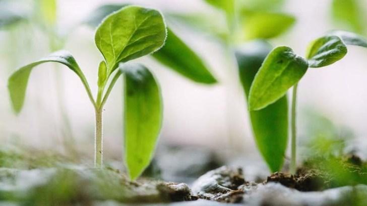 plantas pequeñas