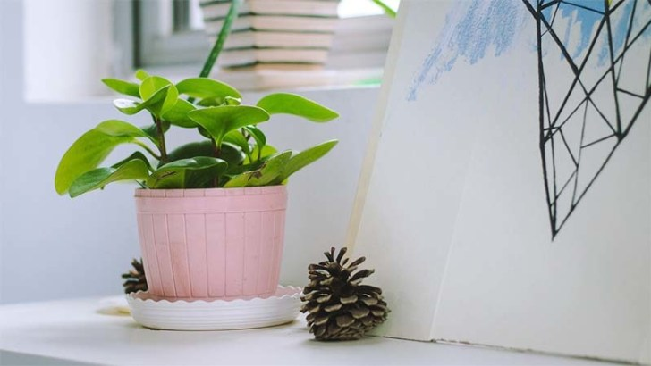 Las plantas contribuyen a nuestra salud