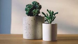 plantas-de-escritorio