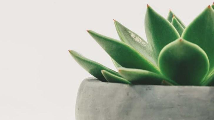 Reacciones de las plantas ante nuestra voz