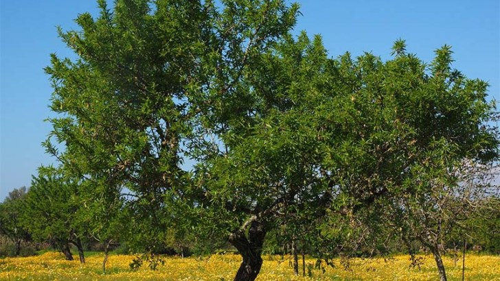 Árboles para jardines pequeños