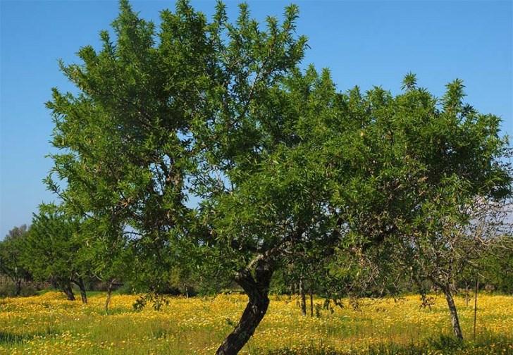 Arboles Para Jardines Pequenos Wwwplantasyjardineses - Arboles-pequeos