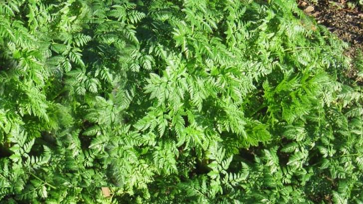 Plantas terapéuticas