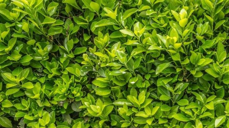 Plantas que pueden convertirse en espías