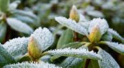 Regar durante el invierno, cómo y cuándo