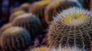¿Cómo se cuida un cactus?