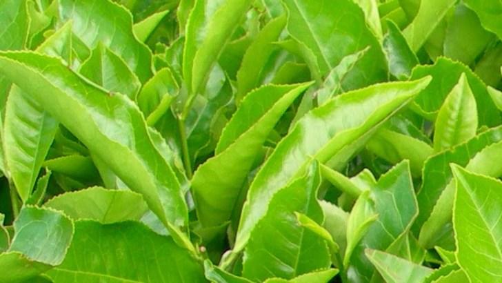 Nanopartículas contra el estrés de las plantas