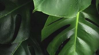 Las plantas pueden reaccionar a la anestesia