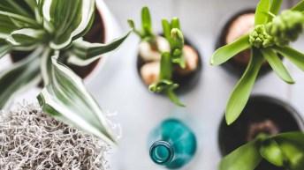 La luz artificial y el crecimiento de las plantas