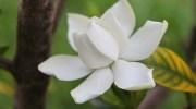 3 arbustos aromáticos para el jardín