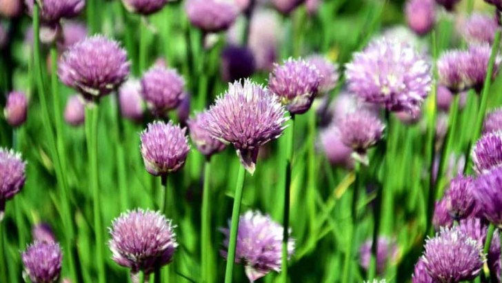 Raíces de plantas para escuchar a otras plantas