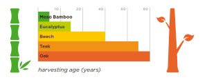 bamboo growth graph