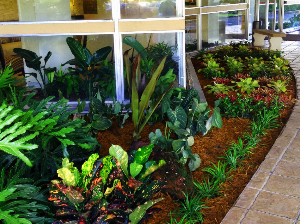 Office Plant Care, Leasing, And Maintenance
