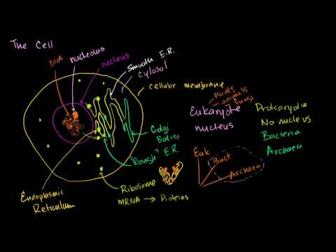 What Are The Parts Of A Cell Even A Friendly Alien Could