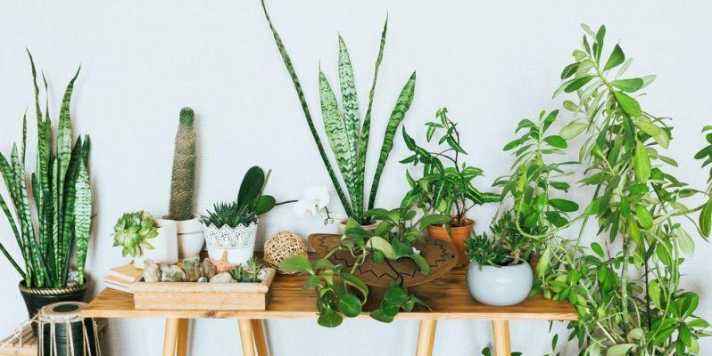 online planten bestellen - groene kamerplanten kopen