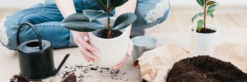 planten verzorging goed voor je