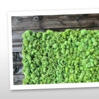 mospaneel kopen voor moswand of mosschilderij 2