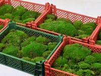 Bolmos Groen plastic krat 2