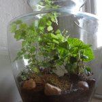 20 Best Terrarium Plants For A Beautiful Diy Terrarium
