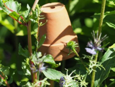 RHS Grow Your Own Garden with The Raymond Blanc Gardening School used old plant pots as cane toppers to great effect...