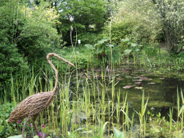 Herons guard the wildlife pond