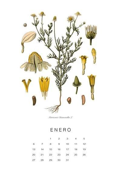 calendario-planthae1