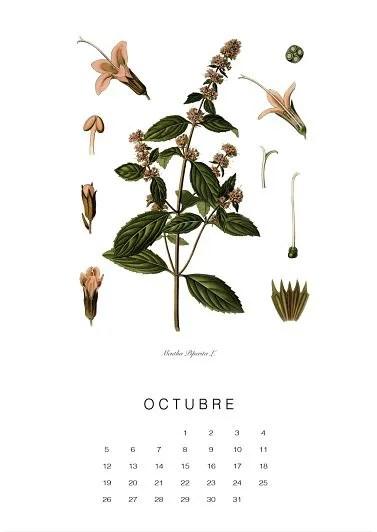 calendario-planthae10