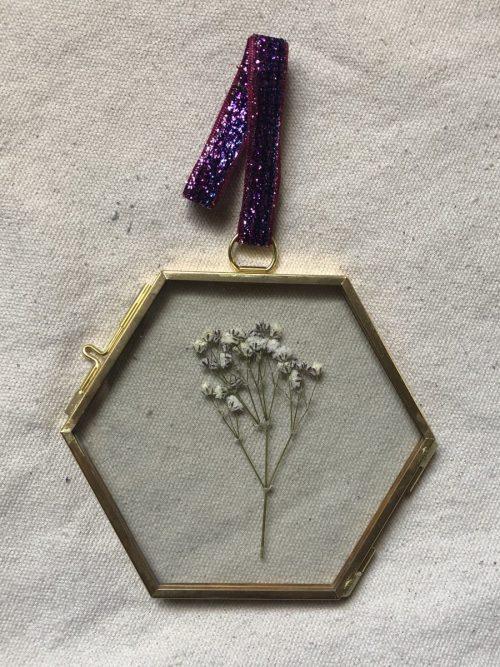 herbario-paniculata
