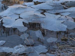 ijs in plantij 2013