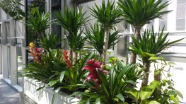 Indoor Plantscape Maintentance