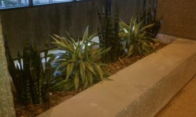indoor plantscape