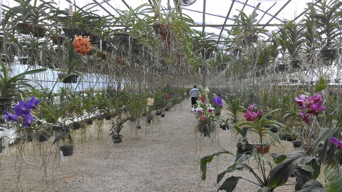 Orchid greenhouse