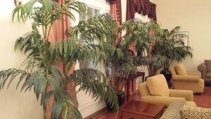 silk plants in office