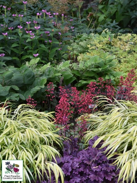 Plant Combinations for Shade