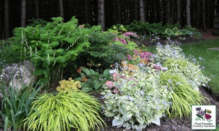 Perennial Combinations for Shade