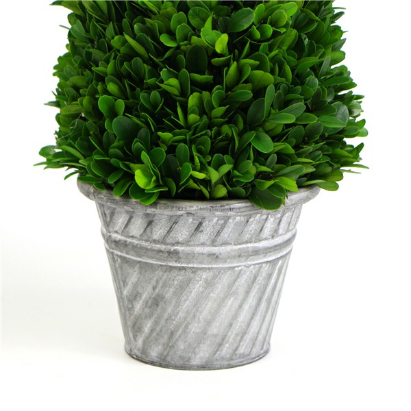 preserved boxwood topiary in pot