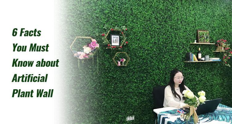 6 Facts You Must Know about Artificial Plant Wall