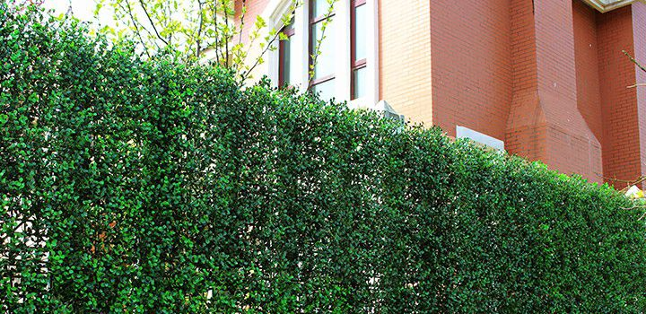A006 artificial box hedges uses for fence screen