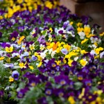 Annual Flowers Creek Side Gardens