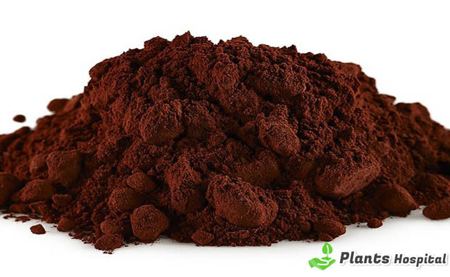 "Cacao ""ancho ="" 650 ""altura ="" 400 ""srcset ="" https://i1.wp.com/www.plantshospital.com/wp-content/uploads/2019/08/Cocoa.jpg?w=1140&ssl=1 650w, https://www.plantshospital.com/ wp-content / uploads / 2019/08 / Cocoa-300x185.jpg 300w ""tamaños ="" (ancho máximo: 650px) 100vw, 650px ""></p data-recalc-dims="