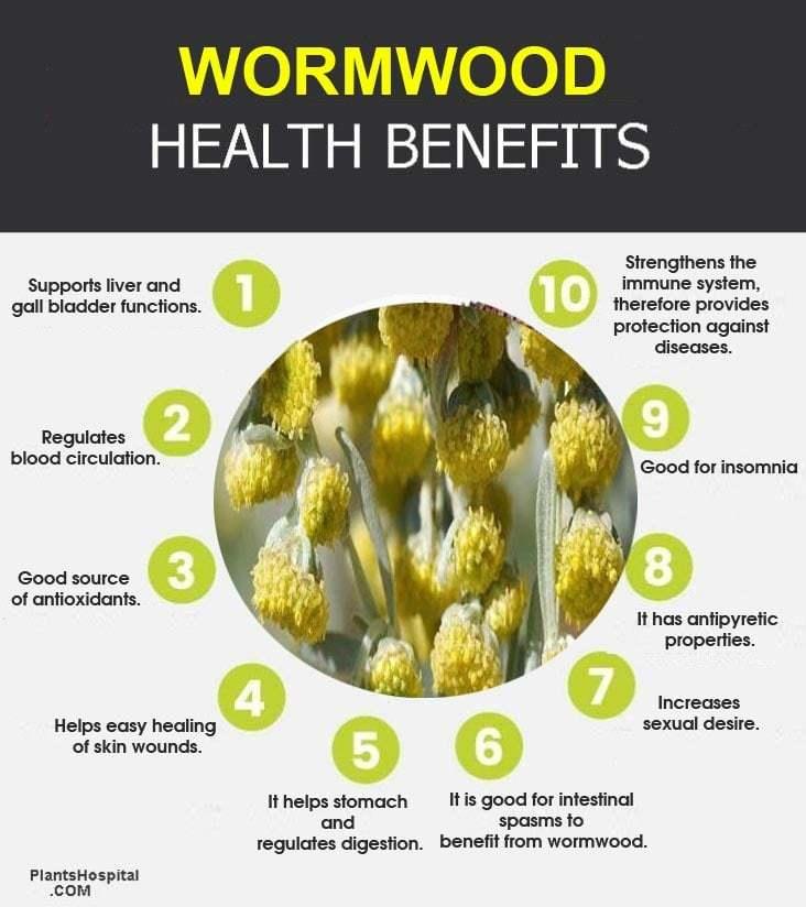 "wormwood-graphic ""width ="" 732 ""height ="" 824 ""srcset ="" https://i1.wp.com/www.plantshospital.com/wp-content/uploads/2019/08/wormwood-graphic.jpg?w=1140&ssl=1 732w, https: // www. plantshospital.com/wp-content/uploads/2019/08/wormwood-graphic-267x300.jpg 267w ""tamaños ="" (ancho máximo: 732px) 100vw, 732px ""></p> <div class="