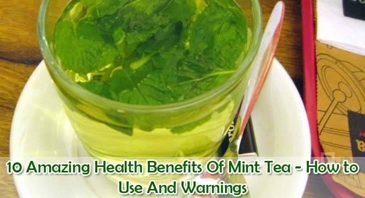 "beneficios-té-menta ""ancho ="" 728 ""altura ="" 395 ""srcset ="" https://i1.wp.com/www.plantshospital.com/wp-content/uploads/2019/09/mint-tea-benefits.jpg?w=1140&ssl=1 728w, https: //www.plantshospital.com/wp-content/uploads/2019/09/mint-tea-benefits-300x163.jpg 300w ""tamaños ="" (ancho máximo: 728px) 100vw, 728px ""></p> <div class="