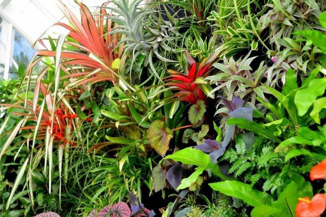 Florafelt Vertical Garden. San Francisco Conservatory of Flowers.