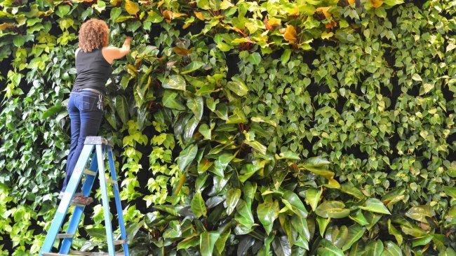 Florafelt® Pockets Vertical Garden by Duviv Gardens San Francisco.