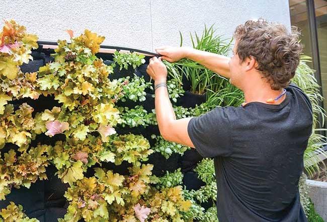 Florafelt® Pocket Panel drip irrigation installation.
