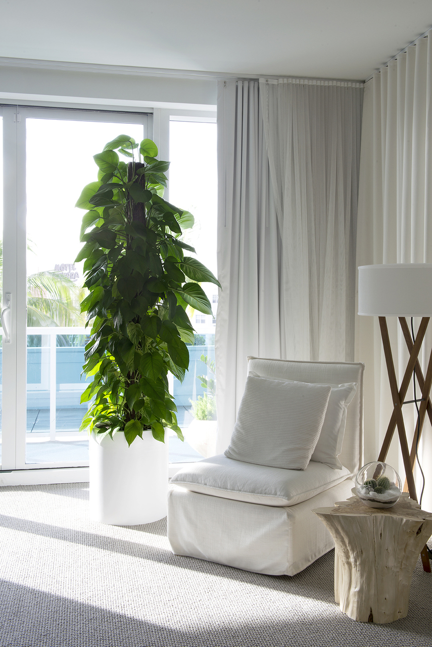 Indoor Plants For Luxury Apartments Plant The Future