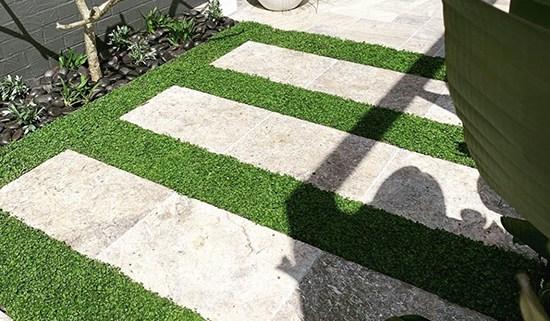Plant Tiles Dichondra repens